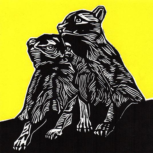 Raccoons sq